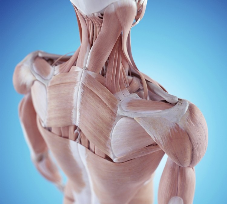 Preventing Shoulder and Rotator Cuff Injuries Through Corrective Exercise Programming Part 2