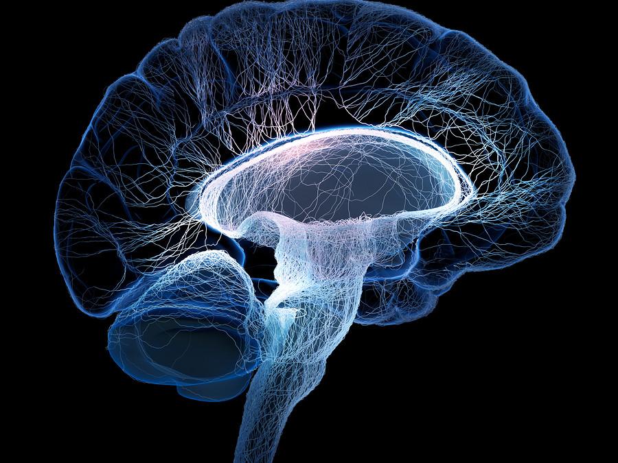 10 Brain Boosting Foods and Strategies