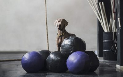 GYM DOGS: WALK OR STAY?: