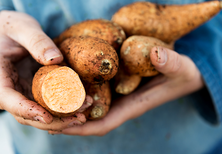 Sweet potatoes vs. potatoes: Which are really healthier? [Infographic] :